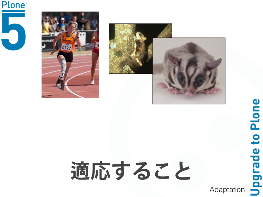 ᧱ԠͫΝͥͺ Adaptation