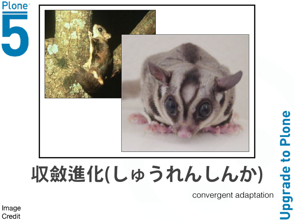 ऩᆄ᭢ặ ͩΗ͘ΞΥͩΥ͝  Image  Credit convergent adaptat...