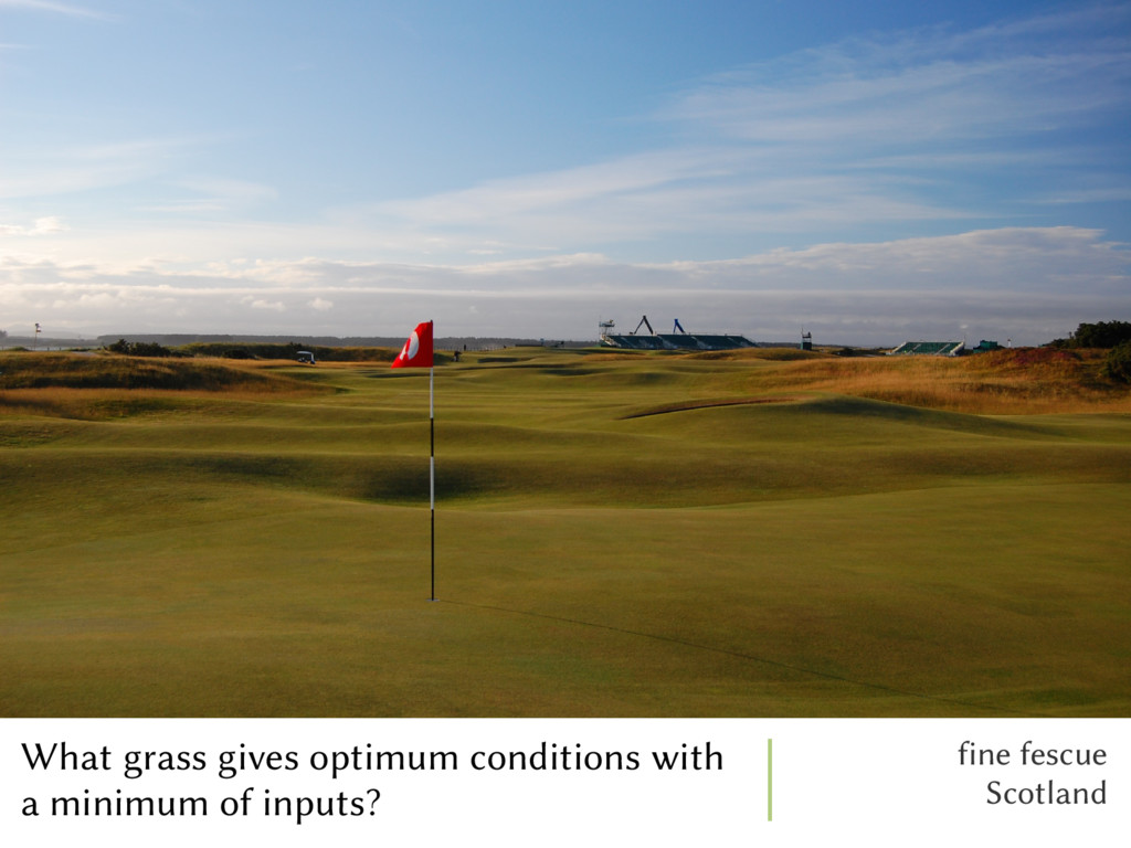 What grass gives optimum conditions with a mini...