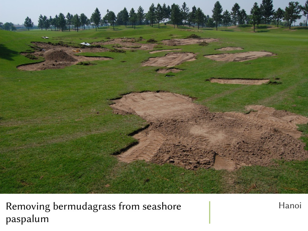 Removing bermudagrass from seashore paspalum Ha...