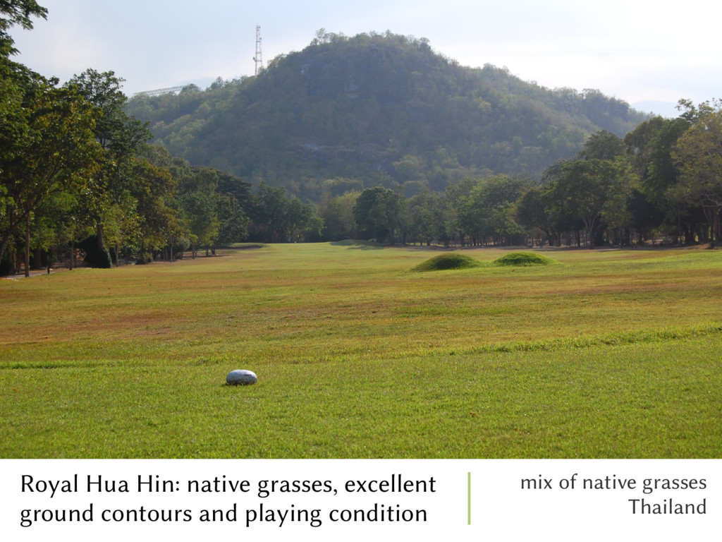 Royal Hua Hin: native grasses, excellent ground...
