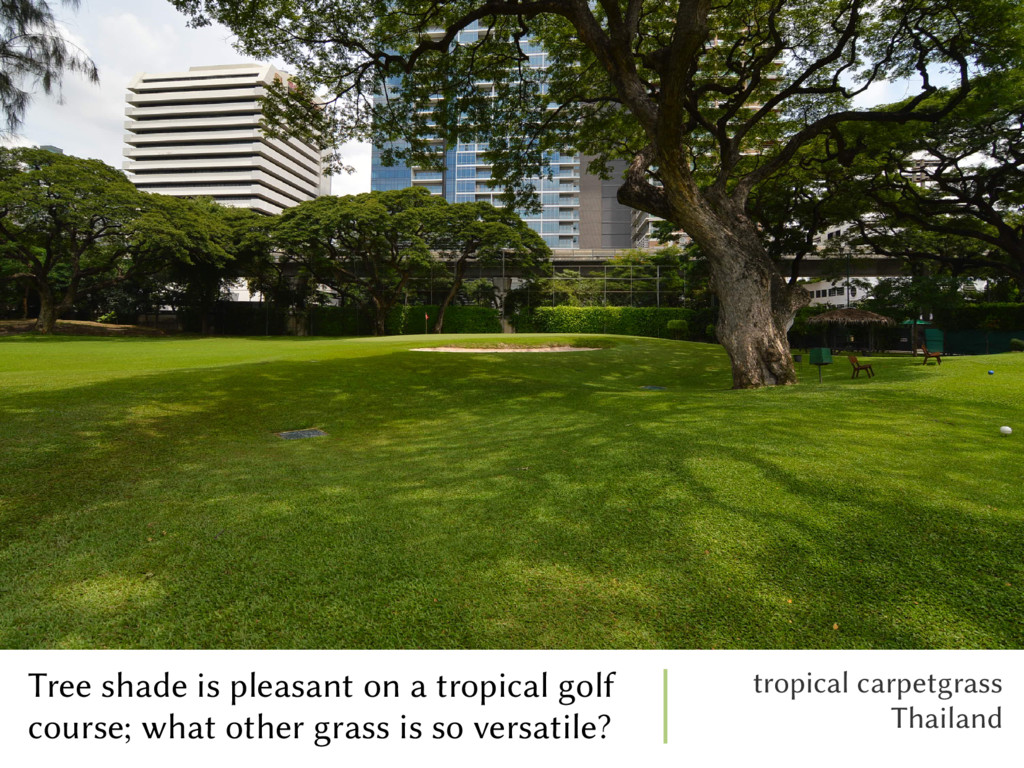 Tree shade is pleasant on a tropical golf cours...