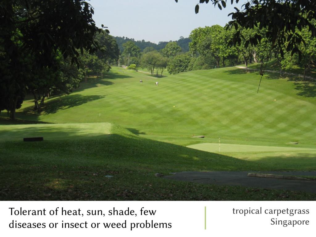 Tolerant of heat, sun, shade, few diseases or i...