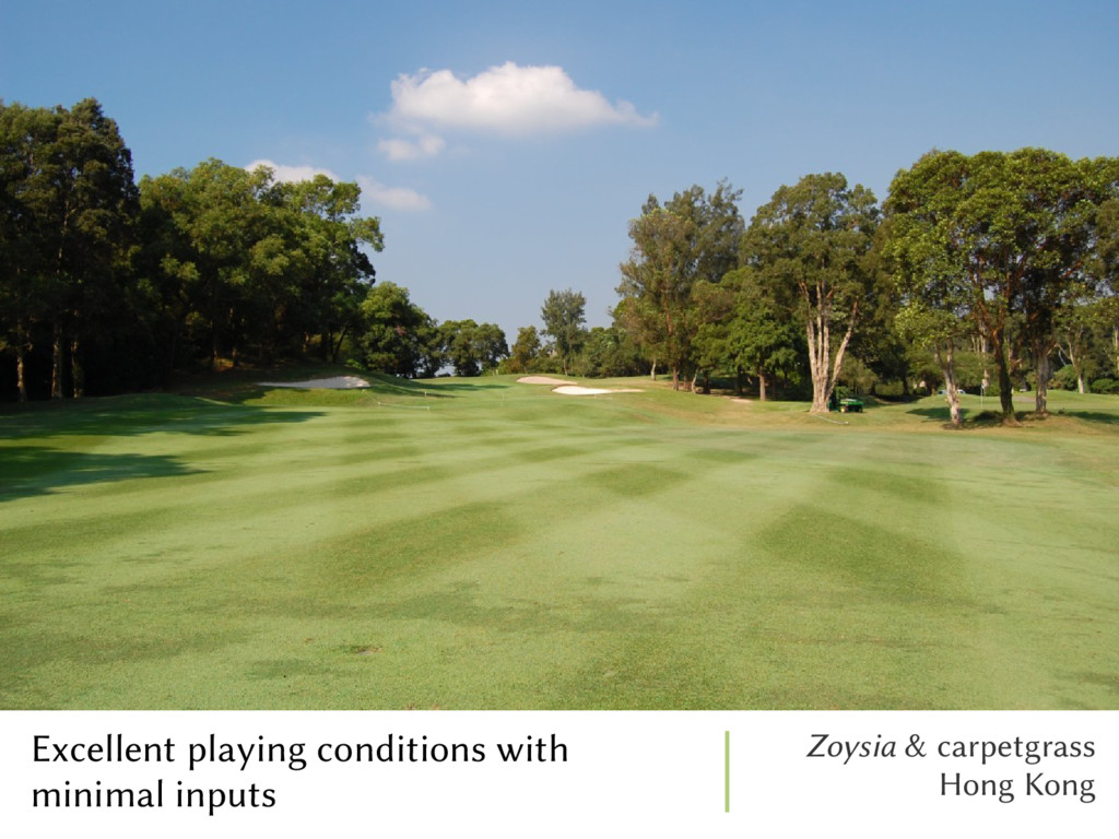 Excellent playing conditions with minimal input...