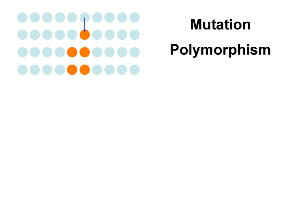Polymorphism Mutation