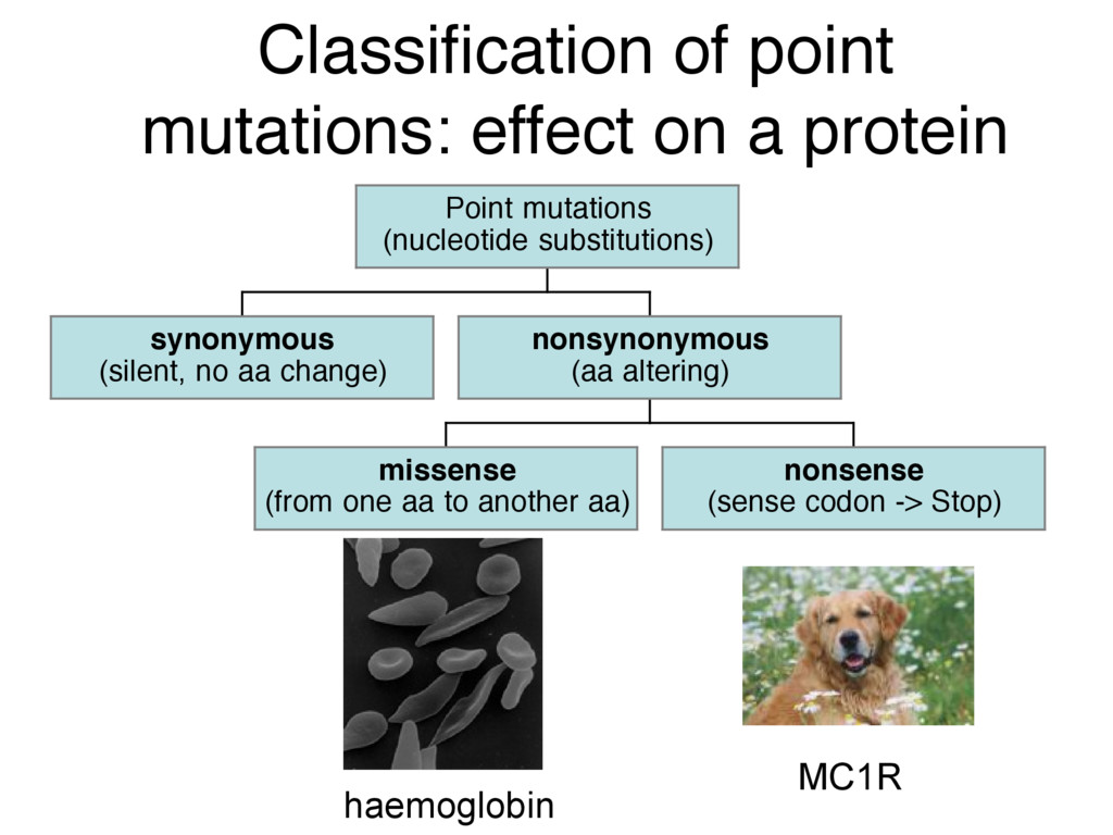 Classification of point mutations: effect on a p...