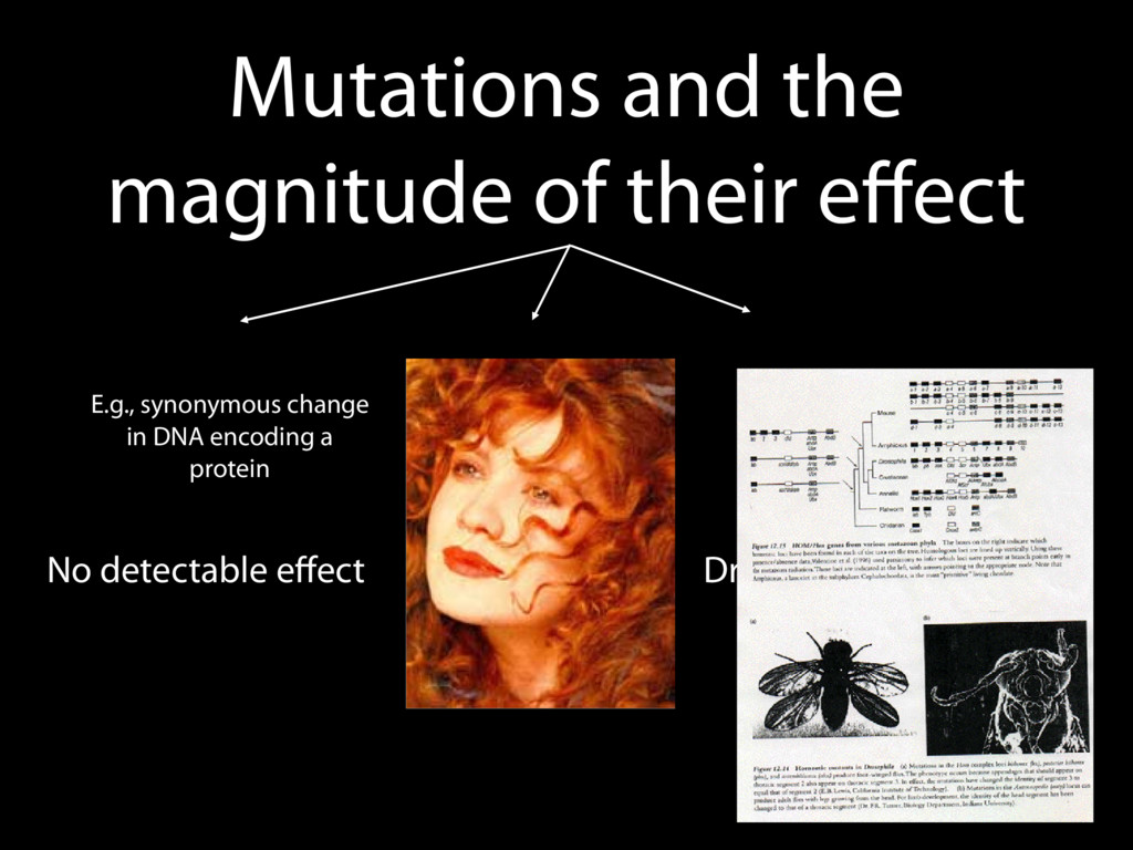 Mutations and the magnitude of their effect No d...
