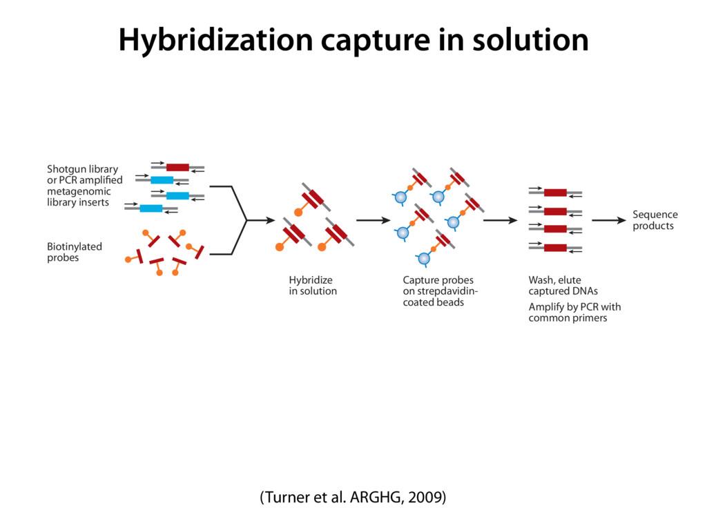 Hybridization capture in solution 6-GG10-13 ARI...