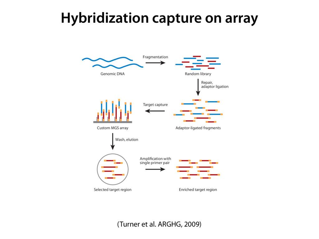 Hybridization capture on array (Turner et al. A...