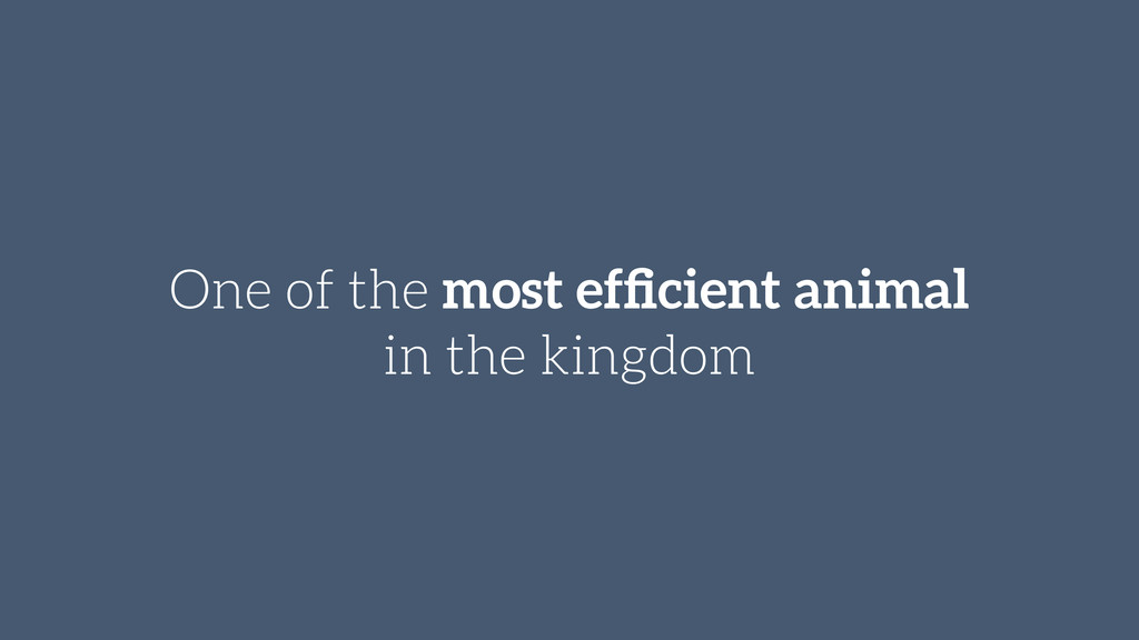 One of the most efficient animal in the kingdom