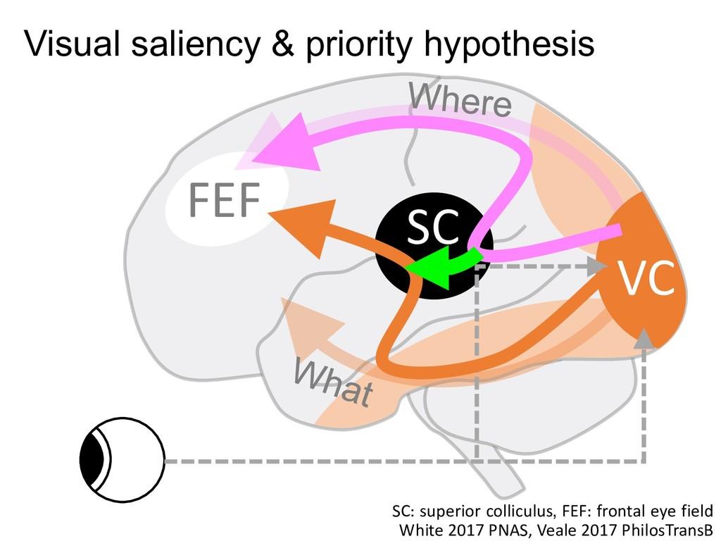 VC SC FEF White 2017 PNAS, Veale 2017 PhilosTra...
