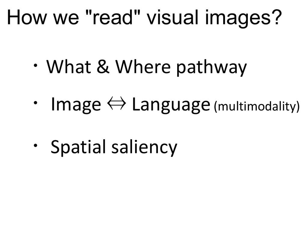 ・What & Where pathway ・ Image ⇔ Language(multim...