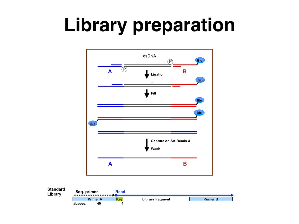Library preparation dsDNA fragments P A B Ligat...
