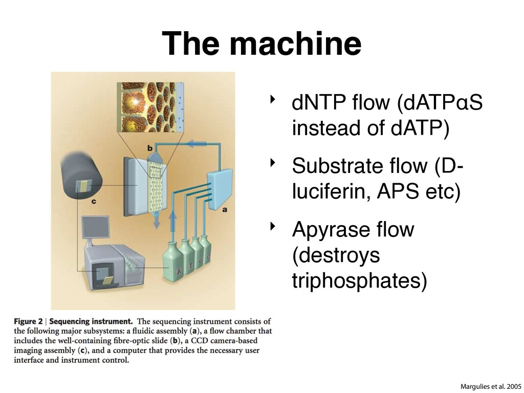 The machine ‣ dNTP flow (dATPαS instead of dATP)...