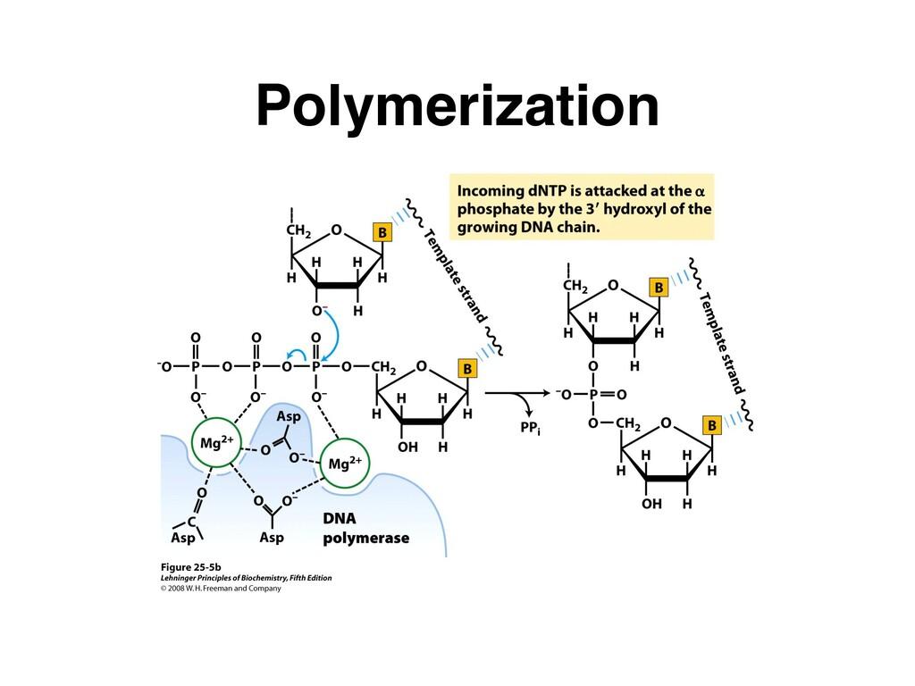 Polymerization