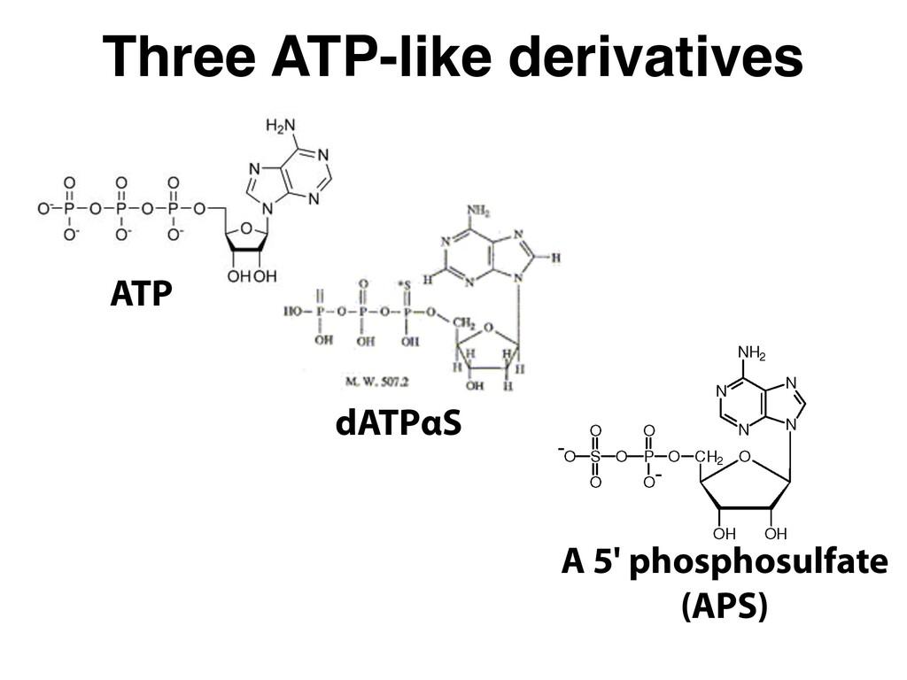 Three ATP-like derivatives ATP dATPαS A 5' phos...