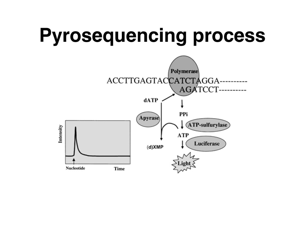 Pyrosequencing process