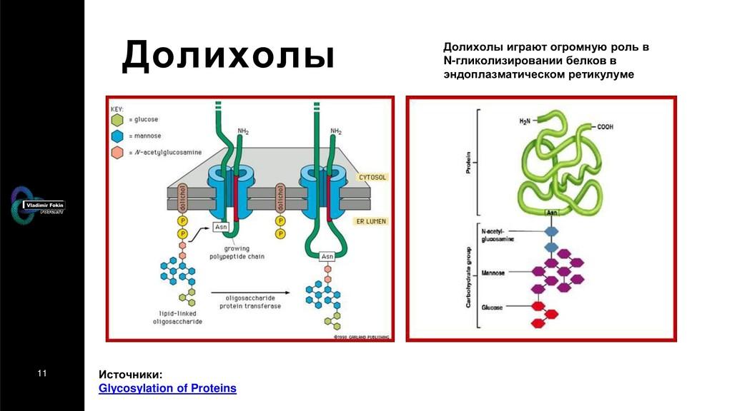 11 Долихолы Источники: Glycosylation of Protein...