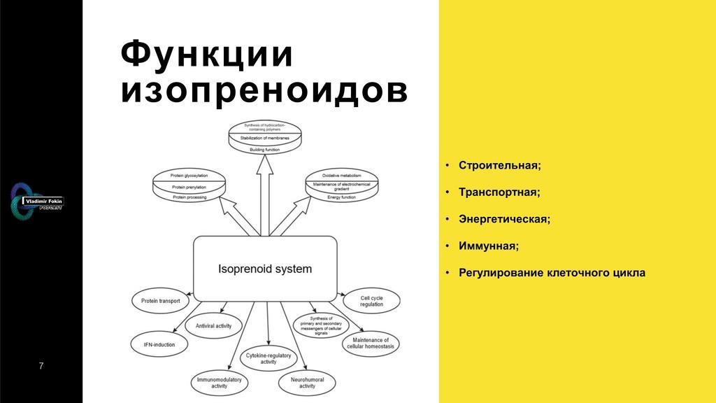 7 Функции изопреноидов • Строительная; • Трансп...