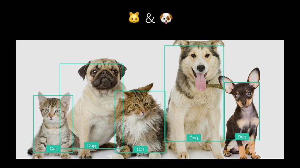 New Detectors - Cat and Dog Detectors Cat D...