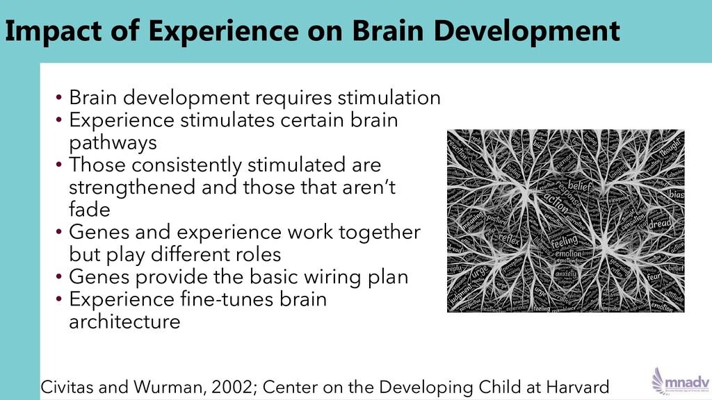 Impact of Experience on Brain Development • Bra...