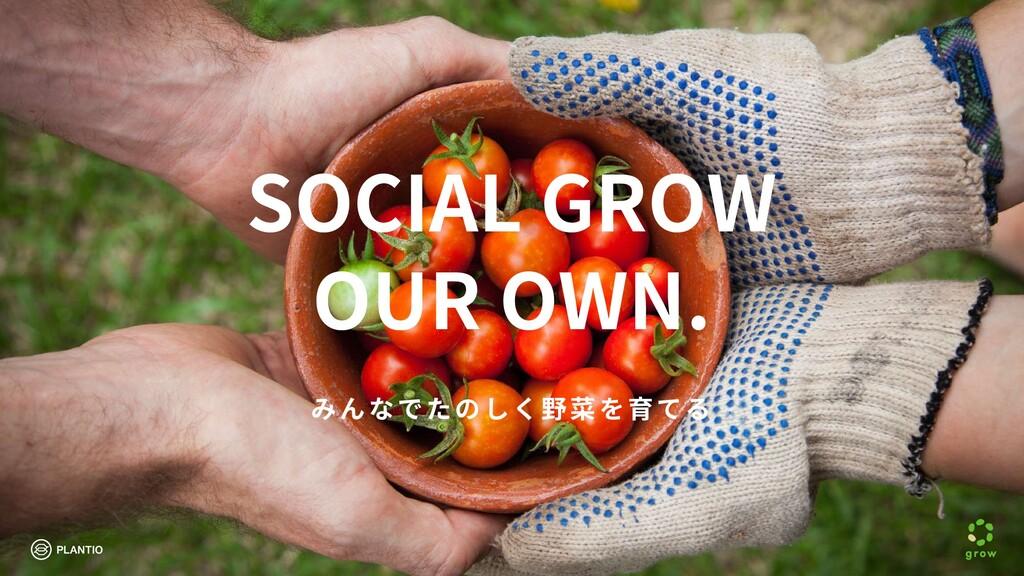 みんなでたのしく野菜を育てる SOCIAL GROW OUR OWN.