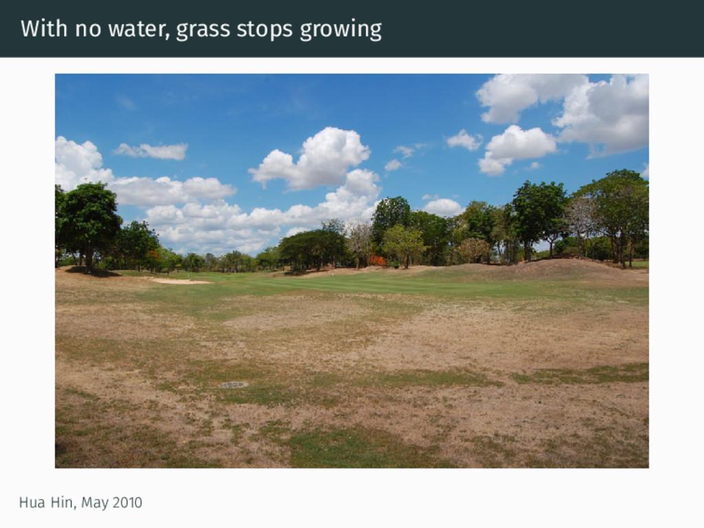 With no water, grass stops growing Hua Hin, May...