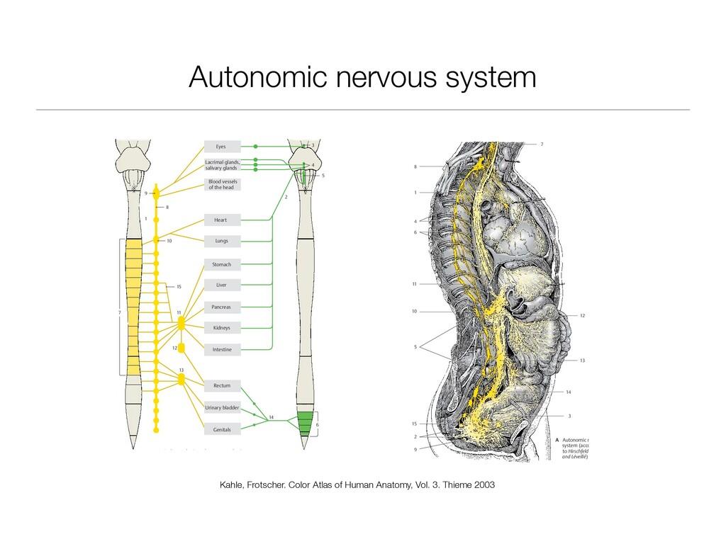 Autonomic nervous system 293 Autonomic Nervous ...