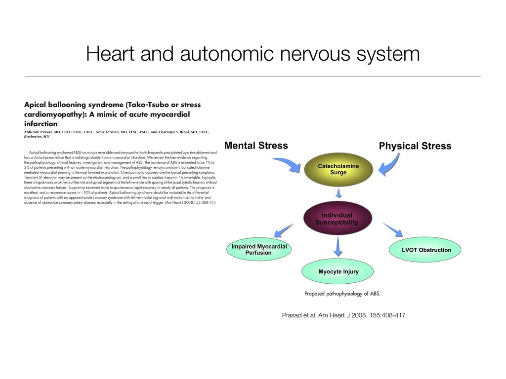 Heart and autonomic nervous system measured in ...