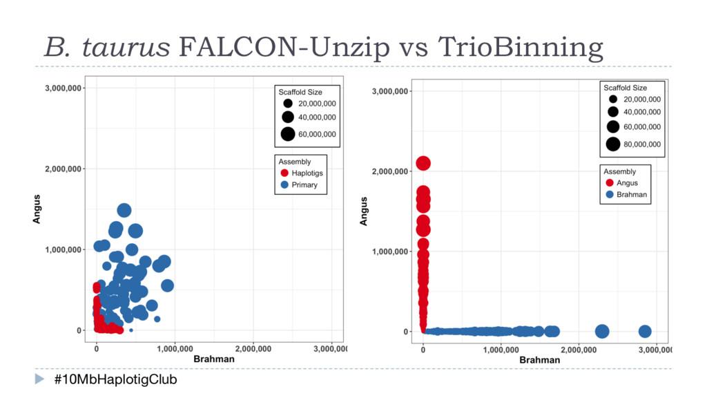 B. taurus FALCON-Unzip vs TrioBinning #10MbHapl...