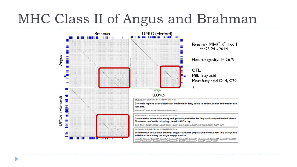 MHC Class II of Angus and Brahman chr23 24 - 26...