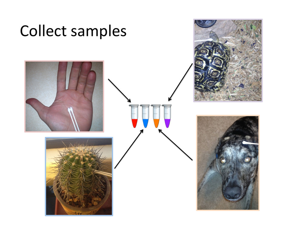 Collect samples