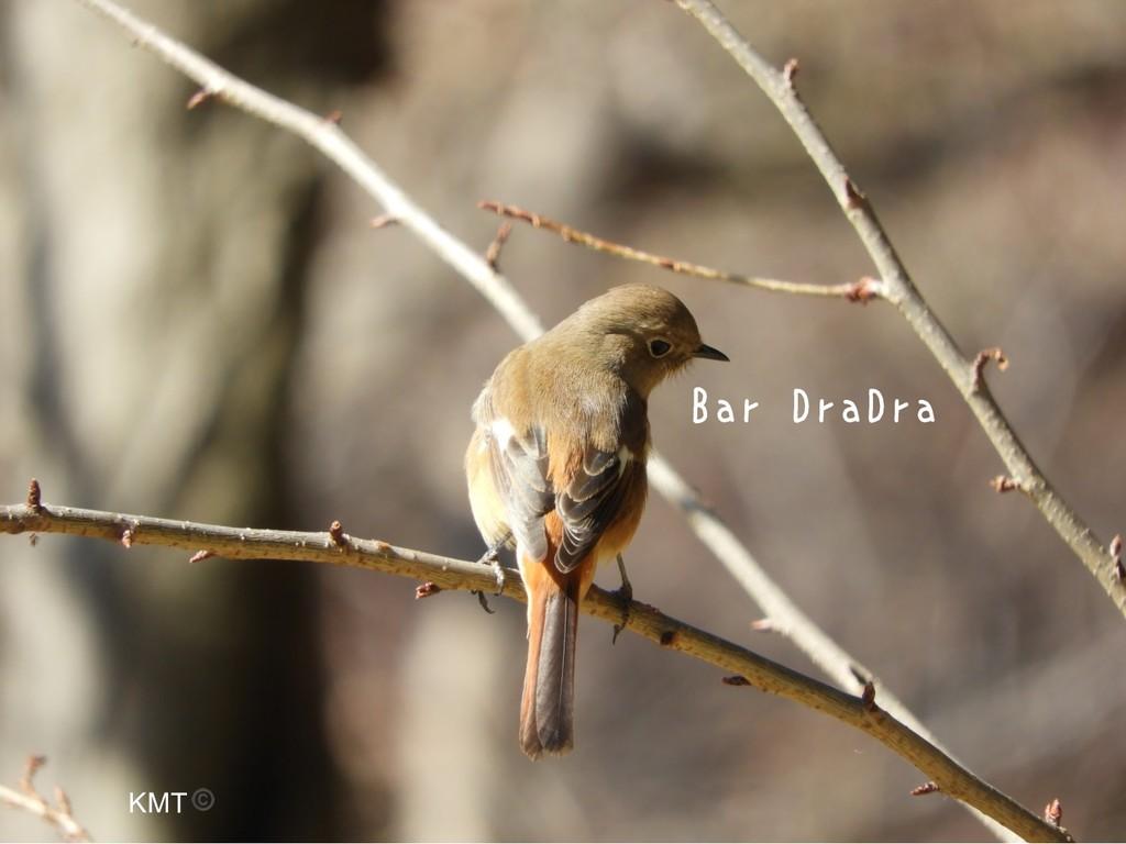 Bar DraDra KMT©