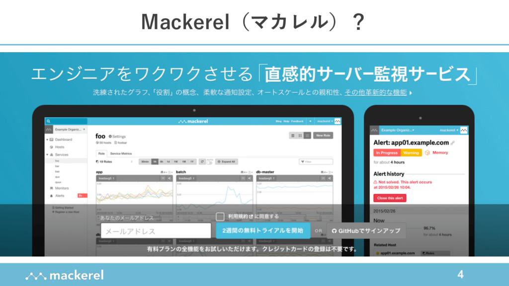4 Mackerel(マカレル)?