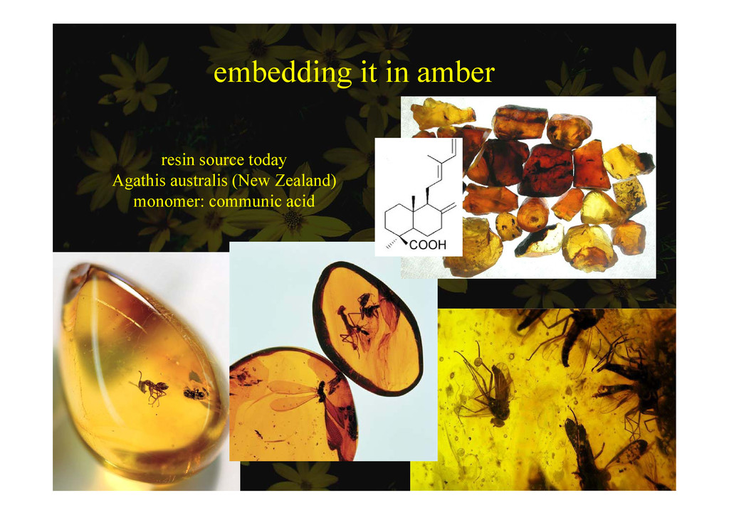 embedding it in amber e bedd g be resin source ...