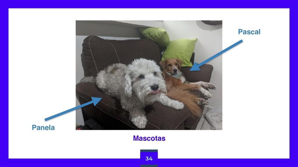 34 Pascal Mascotas Panela