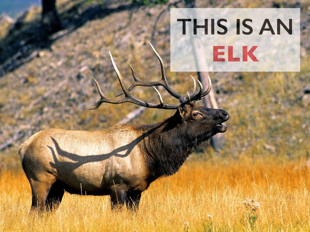 THIS IS AN ELK 3
