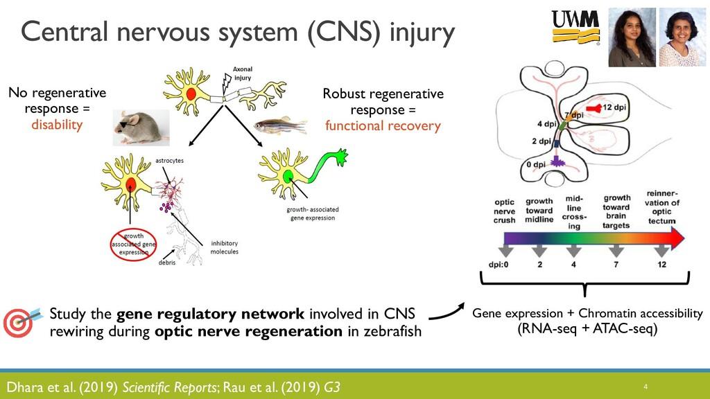 4 No regenerative response = disability Central...