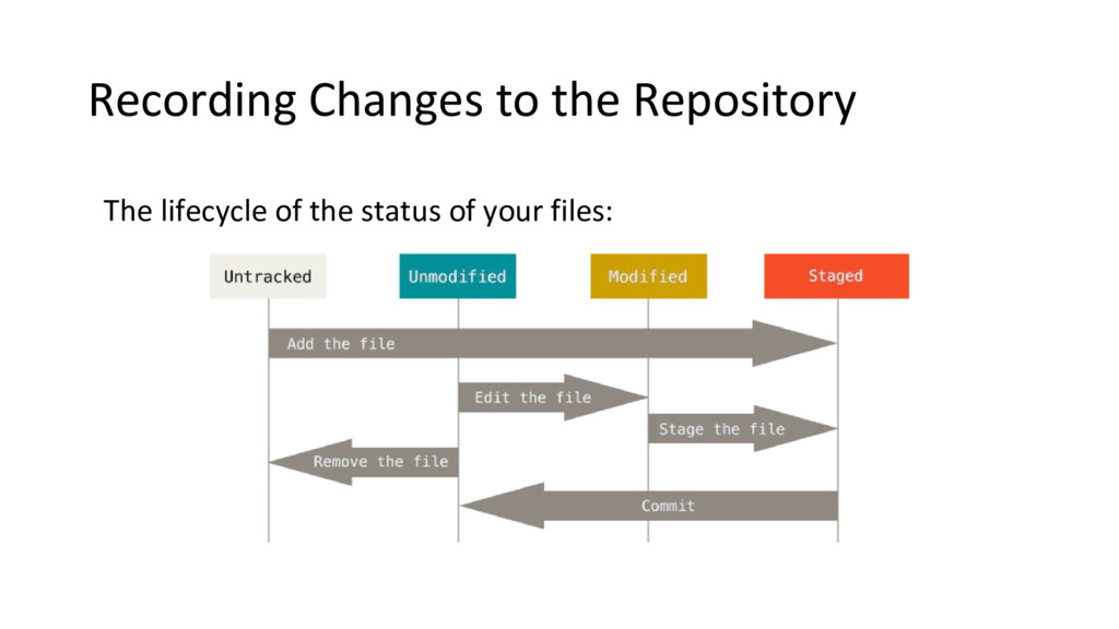 Recording Changes to the Repository The lifecyc...