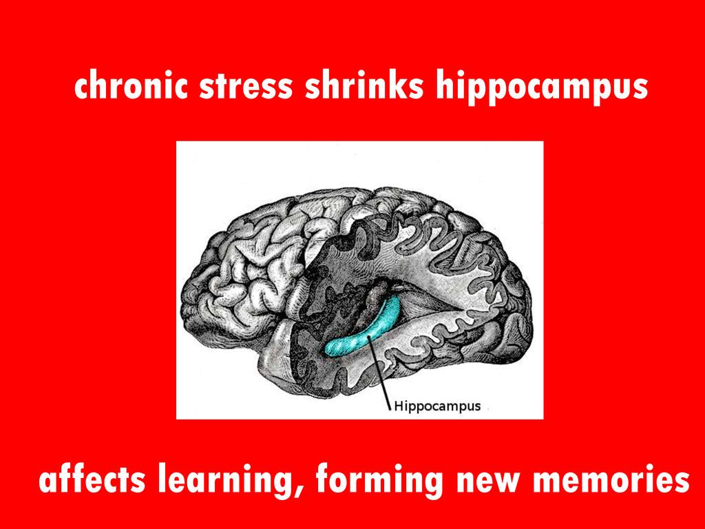 chronic stress shrinks hippocampus affects lear...