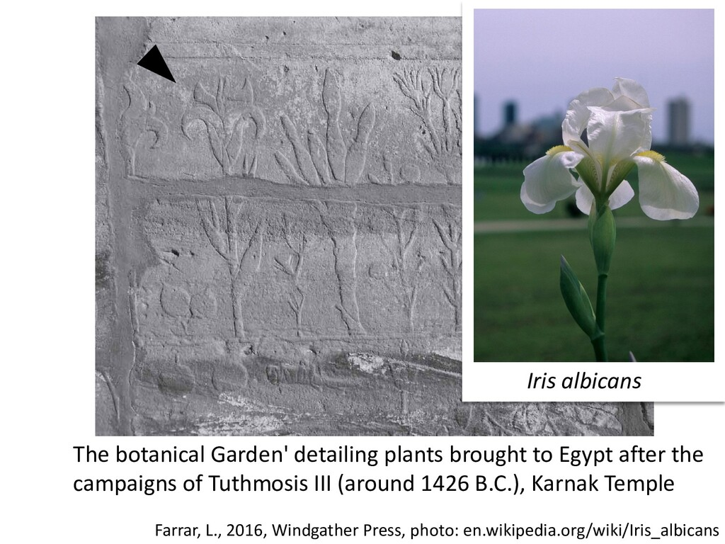 The botanical Garden' detailing plants brought ...
