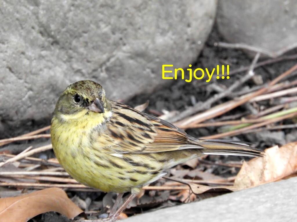 Enjoy!!! KTM