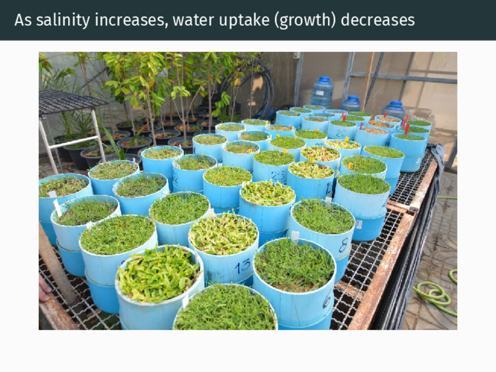 As salinity increases, water uptake (growth) de...