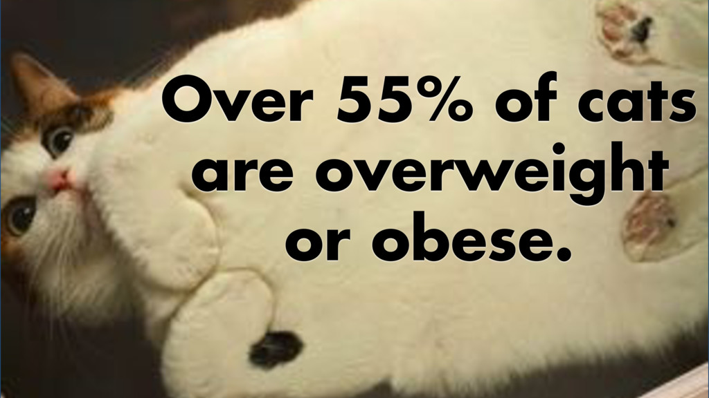 Over 55% of cats are overweight or obese.