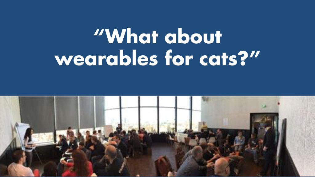 """What about wearables for cats?"""