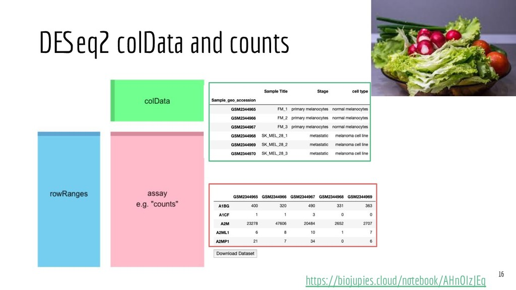 DESeq2 colData and counts https://biojupies.clo...