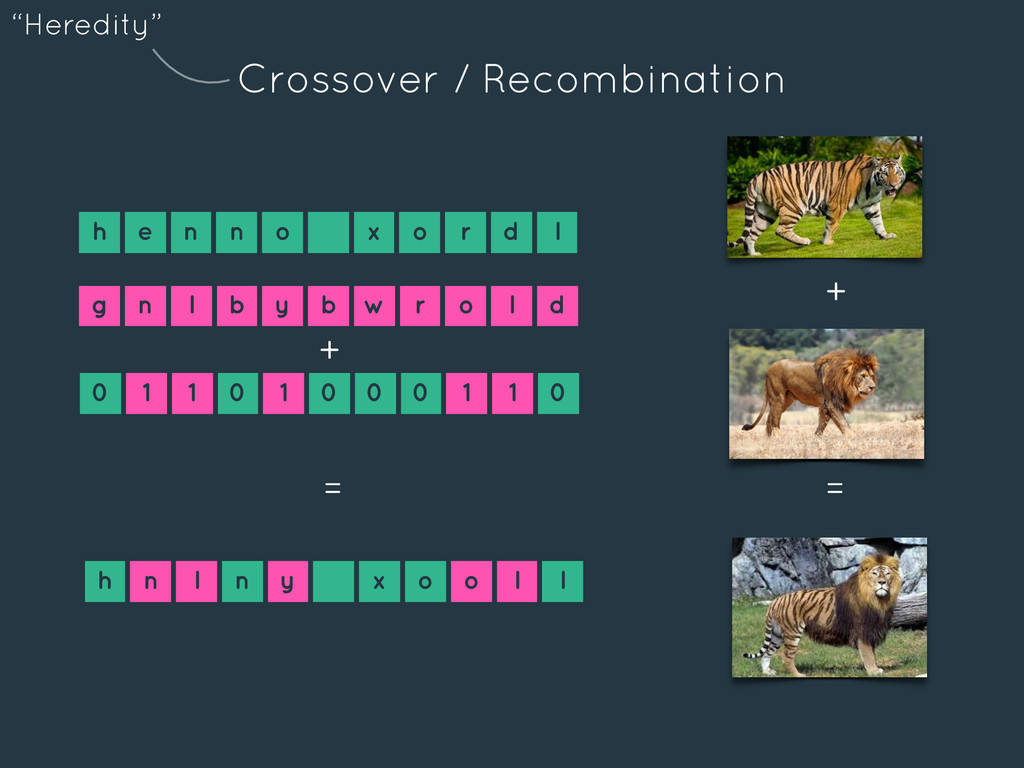 Crossover / Recombination h e n n o x o r d l 0...