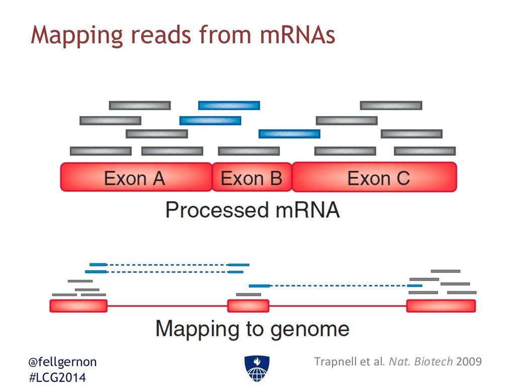 @fellgernon #LCG2014 Mapping reads from mRNAs T...