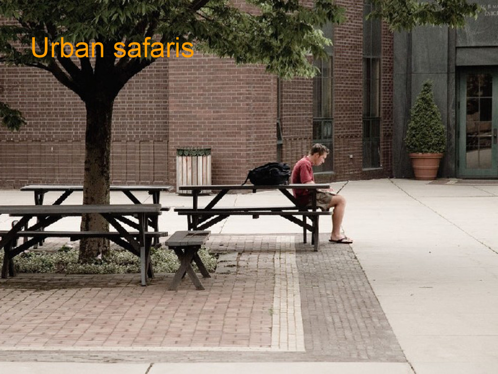 Urban safaris