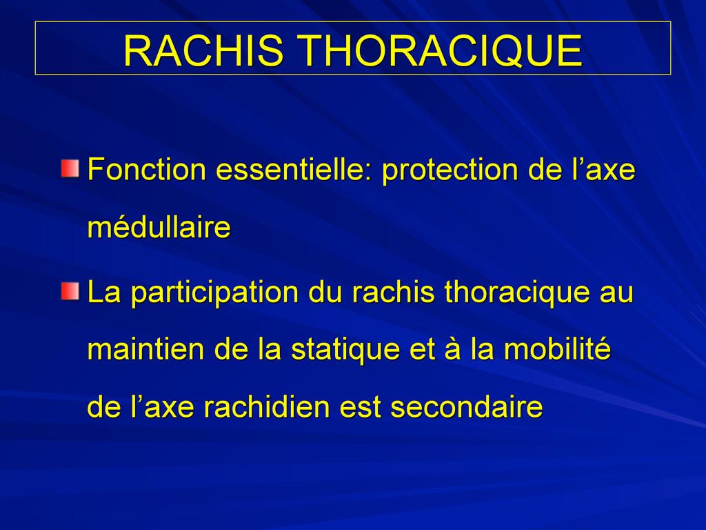 RACHIS THORACIQUE Fonction essentielle: protect...